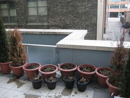springpatio9.JPG