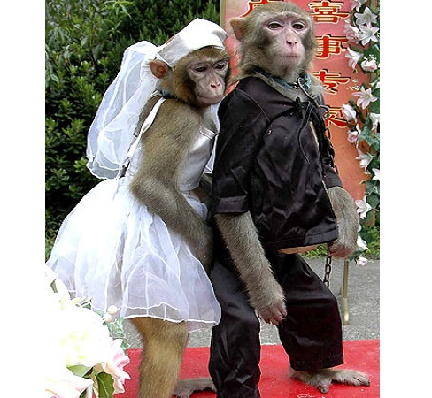 MonkeysMarried2